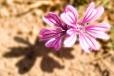 Fleurs_Couleur 167