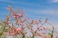 Fleurs_Couleur 168