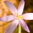 Fleurs_Couleur 173