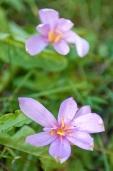 Fleurs_Couleur 176