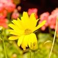Fleurs_Couleur 184