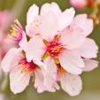 Fleurs_Couleur 190
