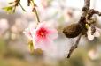 Fleurs_Couleur 191