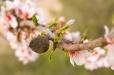 Fleurs_Couleur 192