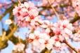 Fleurs_Couleur 197