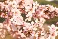 Fleurs_Couleur 205