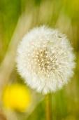 Fleurs_Couleur 206