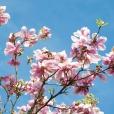 Fleurs_Couleur 207