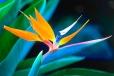Fleurs_Couleur 211