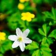 Fleurs_Couleur 226