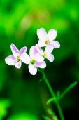 Fleurs_Couleur 227