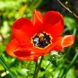 Fleurs_Couleur 232