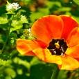 Fleurs_Couleur 233