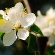 Fleurs_Couleur 236