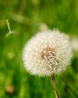 Fleurs_Couleur 238