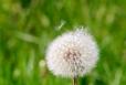 Fleurs_Couleur 239