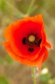 Fleurs_Couleur 241