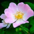 Fleurs_Couleur 242