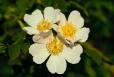Fleurs_Couleur 243