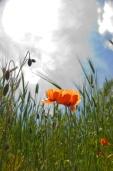 Fleurs_Couleur 246