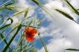 Fleurs_Couleur 250