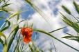 Fleurs_Couleur 251