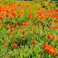 Fleurs_Couleur 252