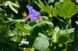 Fleurs_Couleur 256_1