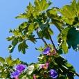 Fleurs_Couleur 258_1