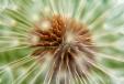 Fleurs_Couleur 274_1