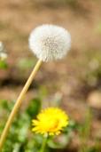 Fleurs_Couleur 275_1