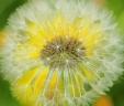 Fleurs_Couleur 276_1