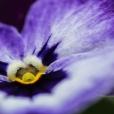 Fleurs_Couleur 281_1