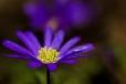 Fleurs_Couleur 282_1