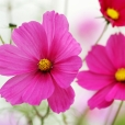 Fleurs_Couleur 283_1