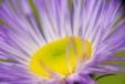 Fleurs_Couleur 284_1