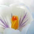 Fleurs_Couleur 285_1