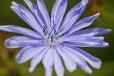 Fleurs_Couleur 287_1