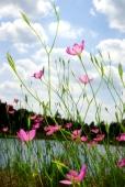 Fleurs_Couleur 288_1