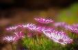 Fleurs_Couleur 289_1