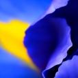 Fleurs_Couleur 290_1