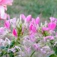 Fleurs_Couleur 291_1