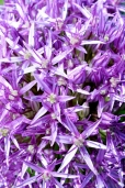 Fleurs_Couleur 292_1