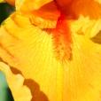 Fleurs_Couleur 293_1