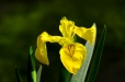 Fleurs_Couleur 294_1