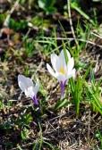 Fleurs_Couleur 295_1