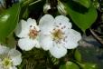 Fleurs_Couleur 302_1