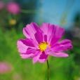 Fleurs_Couleur 303_1