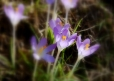Fleurs_Couleur 305_1