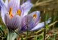 Fleurs_Couleur 306